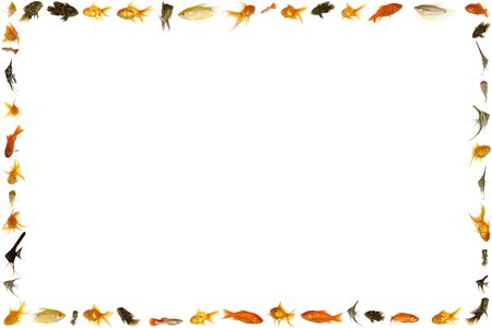 Fish frame isolated on white background 5333 x 8000 pixels. Stock Photo