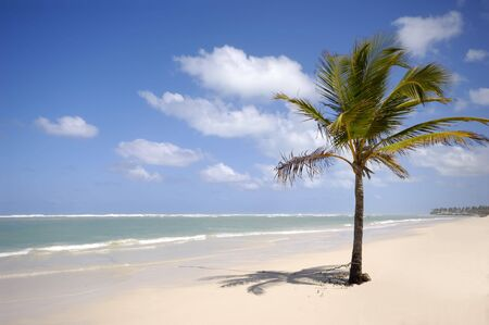 Caribbean beach with palm and white sand Stock Photo - 2833611
