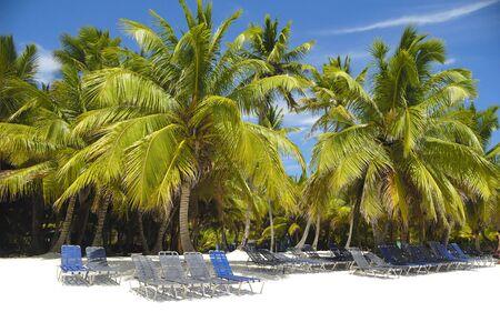 Sunbeds and palms on a very nice beach Stock Photo - 2920966