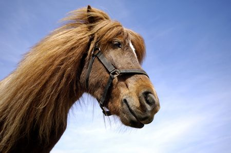 Wide angle shot of horse face in profile.  photo