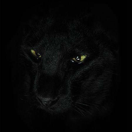 Black kat on a black background photo