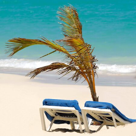 A sun lounger and palm at exotic beach with white sand photo