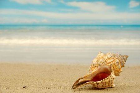 oyster shell: A conch shell  on an exotic beach Stock Photo