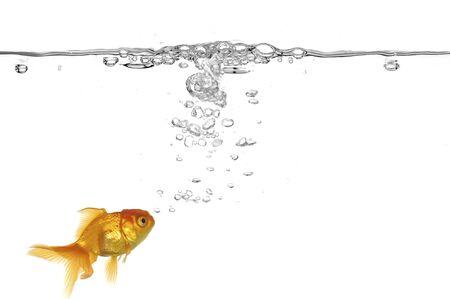 Goldfish y las burbujas de aire. Tomado en un recipiente limpio fondo blanco