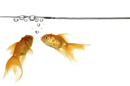 fresh water fish: Waterline with small air bubbles and gold fish