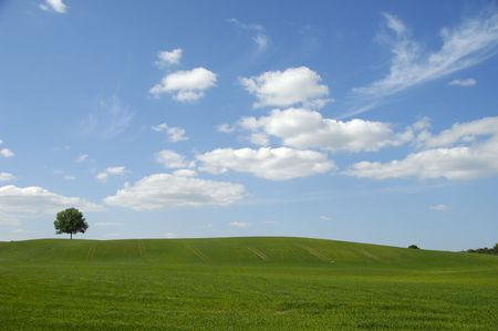 Landscape with a tree on a hill. The sky is blue with white clouds.