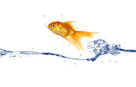 Goldfish is jumping out of the water photo