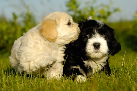 Two sweet puppy dogs in nature. photo