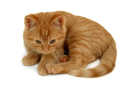 Sweet small kitten on a white background Stock Photo - 3476984