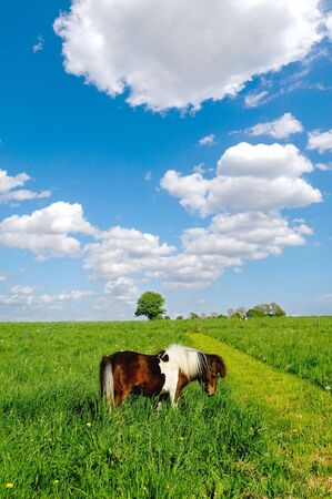 Pony horse is eating green grass. The sky is blue and with white cumulus clouds. photo