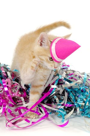 Sweet cat kitten with hat in confetti photo