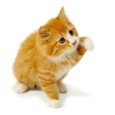 Un gatito pequeño dulce está sentado sobre un fondo blanco Foto de archivo