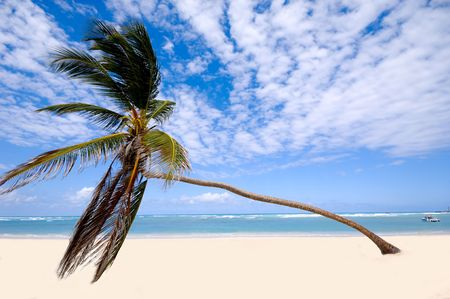 Palm hanging over exotic caribbean beach with the coast in the background. Dominican Republic, Punta Cana. Stock Photo