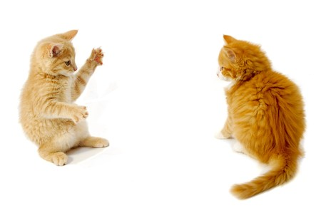 Sweet kittens are just about to fight on a white background. Stock Photo - 7061668