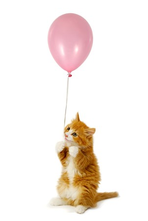 kitten small white: Sweet kitten holding a pink ballon. Taken on a white background. Stock Photo