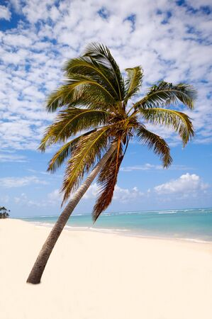 Palm hanging over exotic caribbean beach with the coast in the background. Stock Photo - 7358842