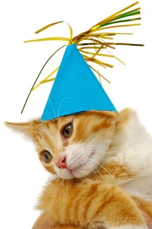 Gatito de gato dulce con sombrero adoptada sobre un fondo blanco
