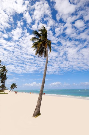 Palm hanging over exotic caribbean beach with the coast in the background.  Dominican Republic, Punta Cana. photo