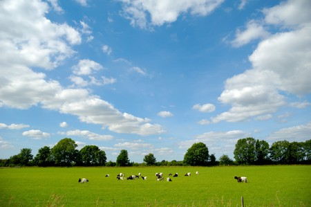 A green field with many goats. The sky is blue with clouds photo