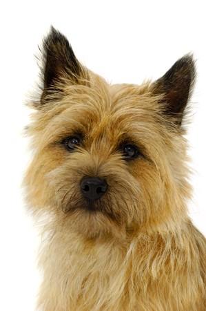 Dog face isolated on a white background photo