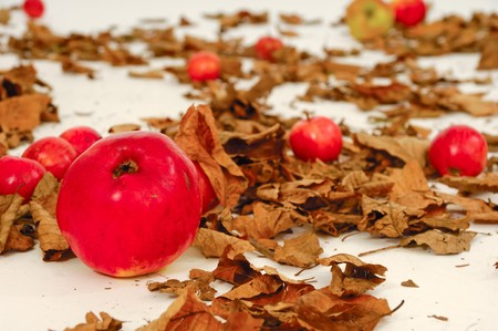 Red apples and old leafs. Studio shot. Stock Photo - 7846774