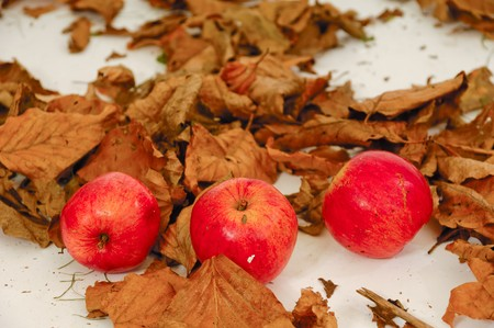 Red apples and old leafs. Studio shot. Stock Photo - 7846776
