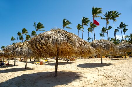 Many parasols made out of palm leafs on beach.  photo