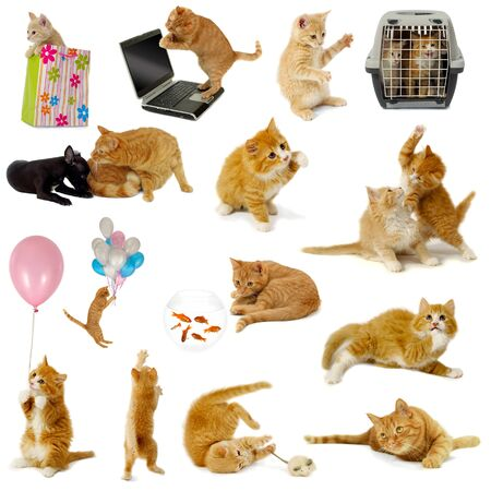 Cat collection isolated on white background. The cats are with laptop, dog, balloons, goldfish and mouse. Stock Photo