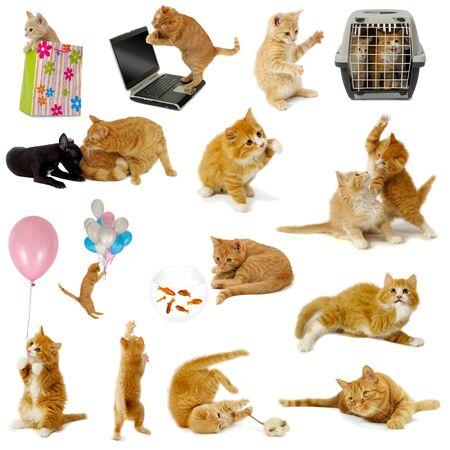 Colección de gato, aislada sobre fondo blanco. Los gatos son con el portátil, perro, globos, peces dorados y el ratón.