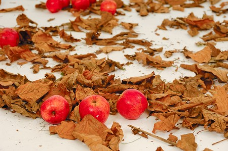 Red apples and old leafs. Studio shot. Stock Photo - 8253518