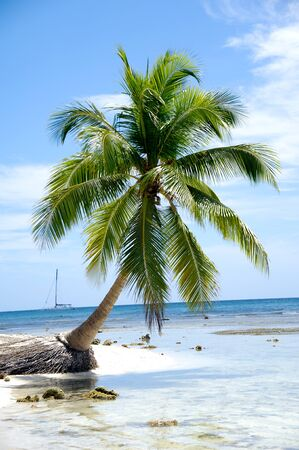 Caribbean beach with palm and white sand with the coast in the background photo