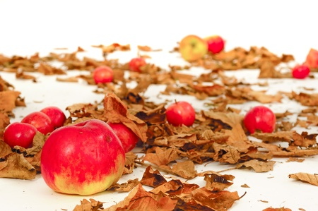 Red apples and old leafs. Studio shot. photo