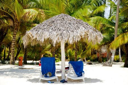 sunbeds: Sunbeds and palms on a very nice beach