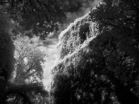 ir: A photograph taken in the infrared range and processed as a black and white showing an old building covered with ivy. Stock Photo
