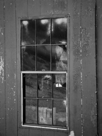 over grown: An infrared black and white photograph of the window of an old shed.