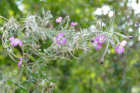 fleurs des champs: Belles fleurs d'automne dans le jardin Banque d'images