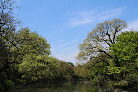 immediately: Inokashira Park, which began in the fresh green immediately after the cherry blossoms were scattered