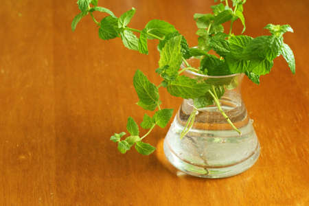 inserted: Mint that is inserted in a vase