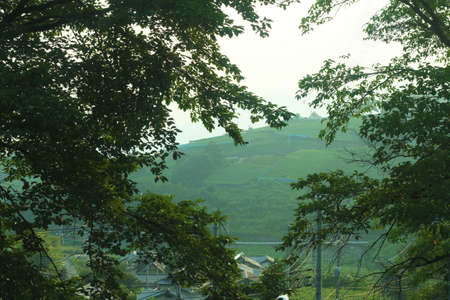mountain peek: Mountain that peek from trees Stock Photo