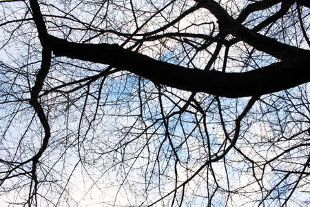copse: Winter trees and sky Stock Photo