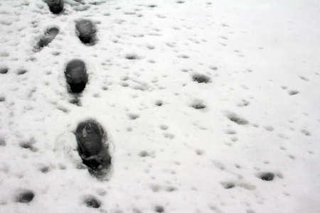 walkway: Town snow fell