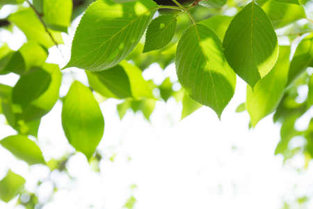 frescura: verde fresco de filtrado de sol a través del follaje