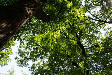 filtering: Sunshine filtering through foliage Stock Photo