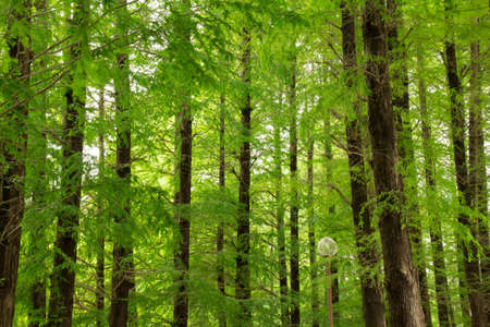 sooth: forest