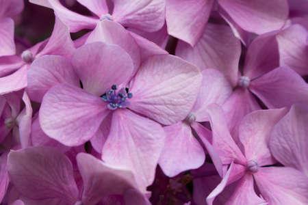 pale colour: Hydrangea garden