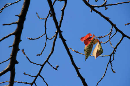 dead leaves: Dead leaves and sky Stock Photo
