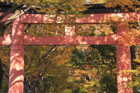 torii: Autumnal leaves and shrine torii