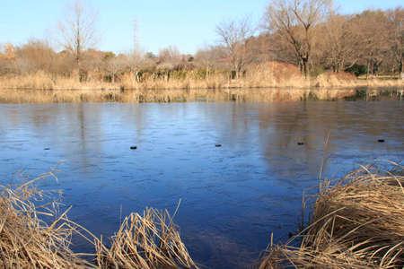 laden: Ice-laden pond