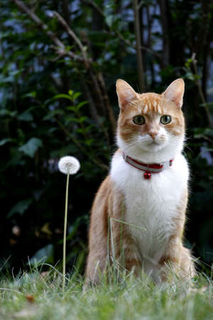 motionless: Cat and Dandelion Outside