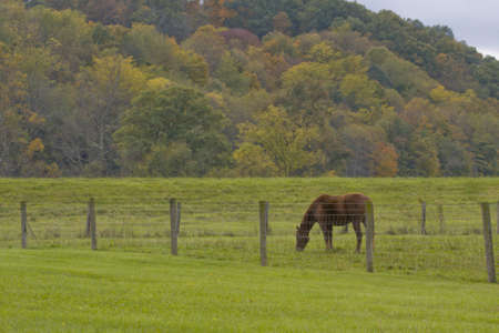 barbed wire and fence: Single horse eating grass in field